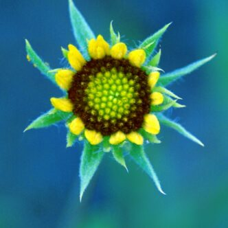 """FLOWER PHOTOGRAPHY- """"YEAR ROUND FLOWER GARDEN"""""""