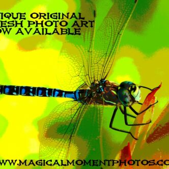 DRAGONFLY PHOTOS AND ARTWORK