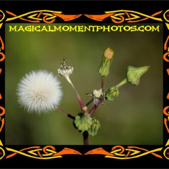 FLOWER PHOTOGRAPHY AND ARTWORK